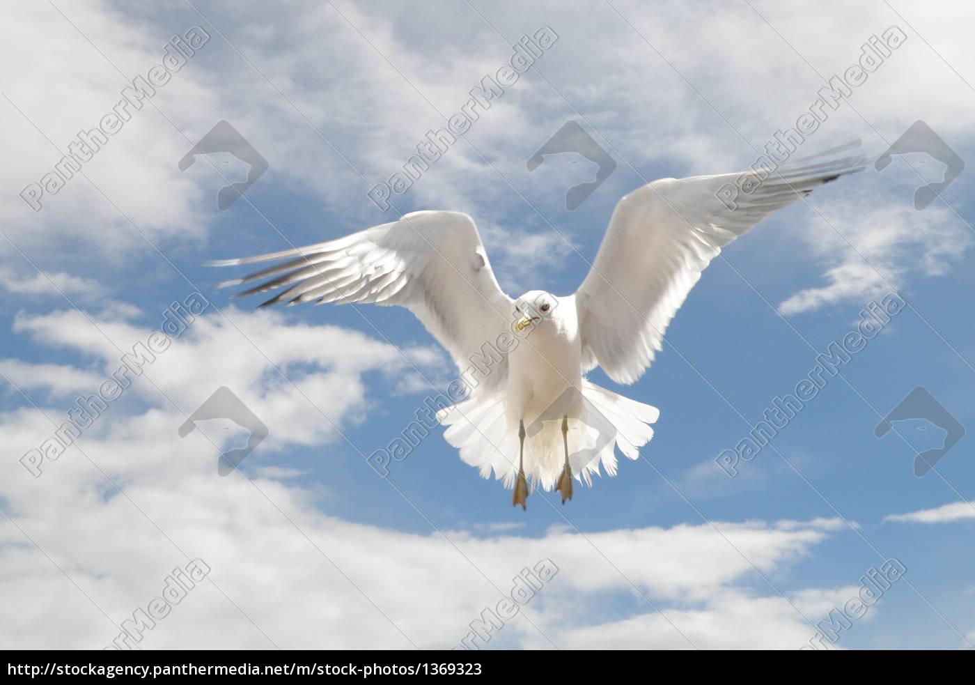 gull - 1369323