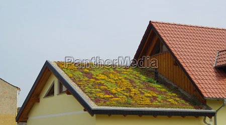green, roof, -, green, roof, 01 - 1371225