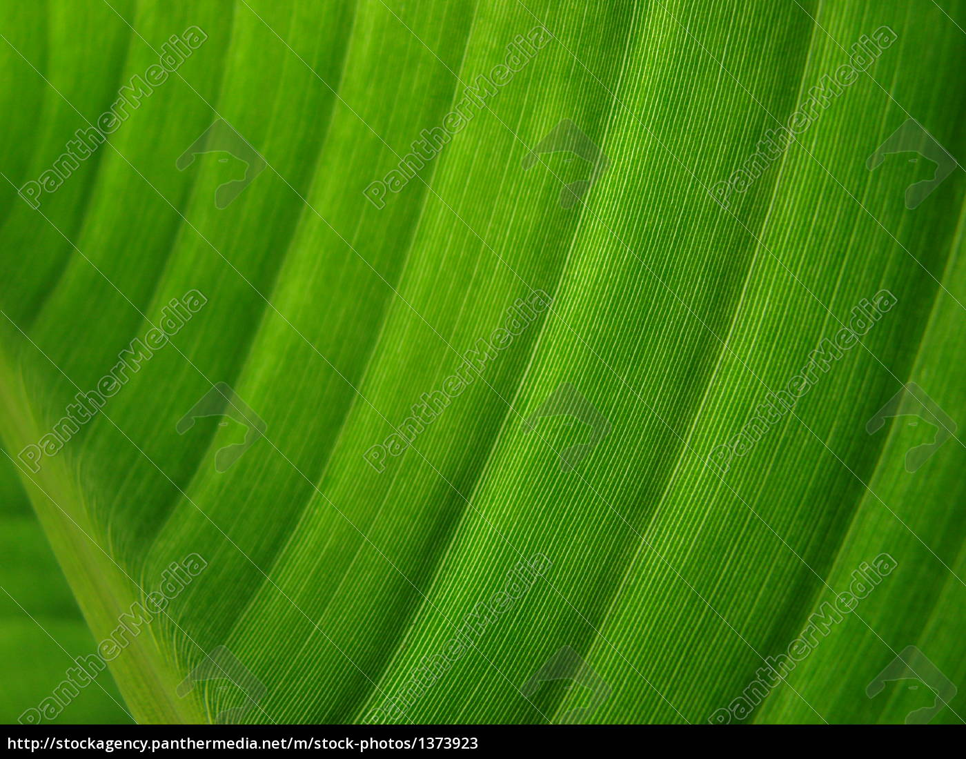banana, palm, leaf, green, dark - 1373923