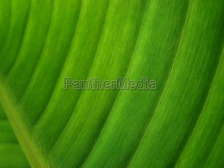 leaf, macro, close-up, macro admission, close up view, closeup - 1373923