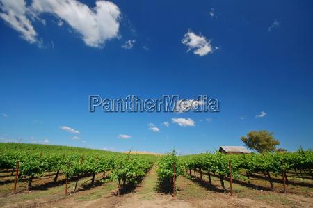vineyard, landscape - 1381247