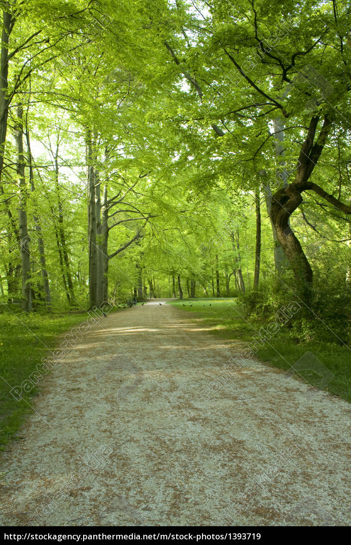 spring, forest - 1393719