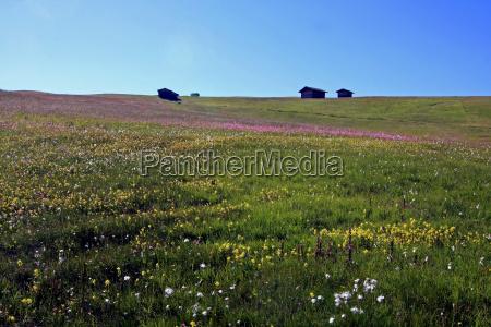 colorful mountain meadows