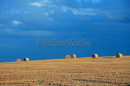 agriculture farming field straw ball straw