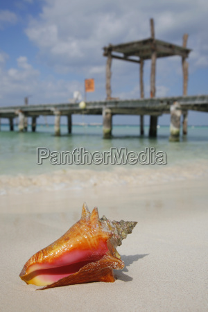 life is a beach conch