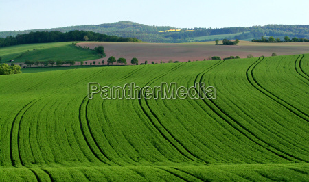 green waves spring fields meadows scenery