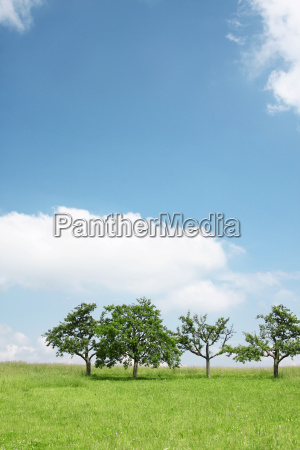 trees under the blue sky