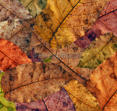 autumn, leaves - 1442461