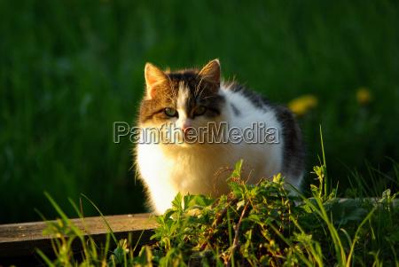 cat in the evening light