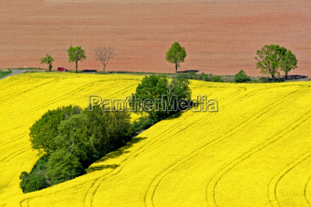 red car and yellow field