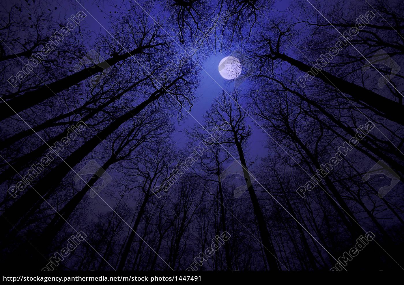 mondnacht - 1447491