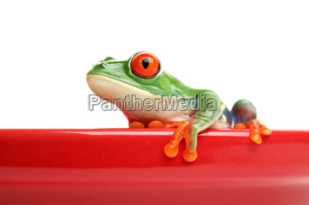 frog, on, red, pot, isolated - 1455635
