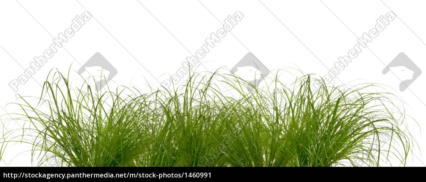 weed - 1460991