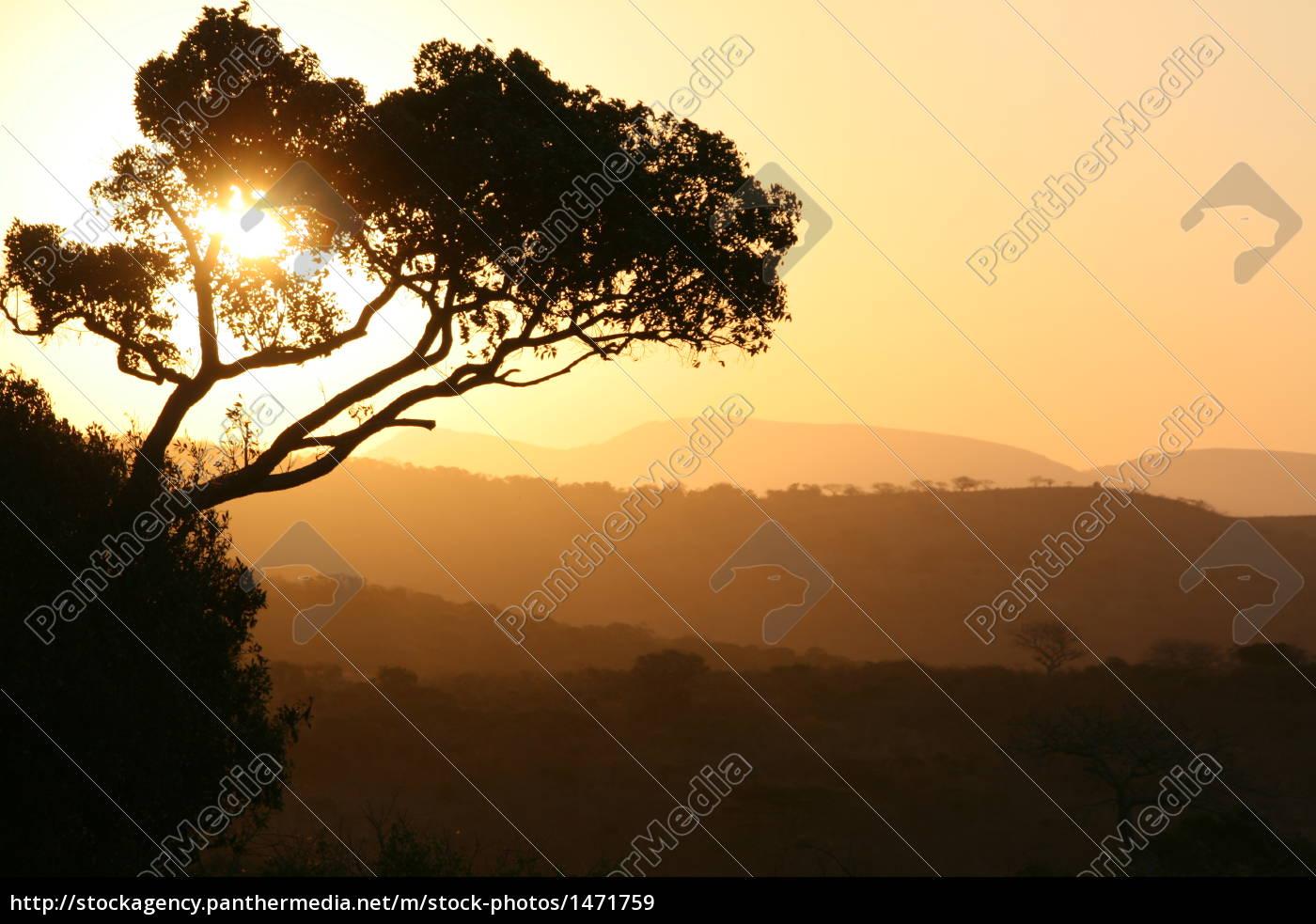 african, sunset - 1471759