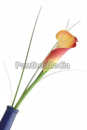 calla, in, slope, grinding, blue, vase - 1478263