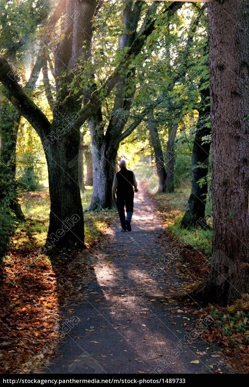 autumn, walk - 1489733