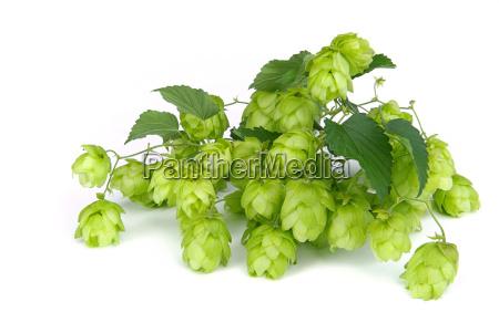 hop hop 05