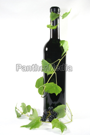 red wine with tendril and vine