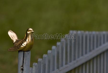 golden, bird - 1504425