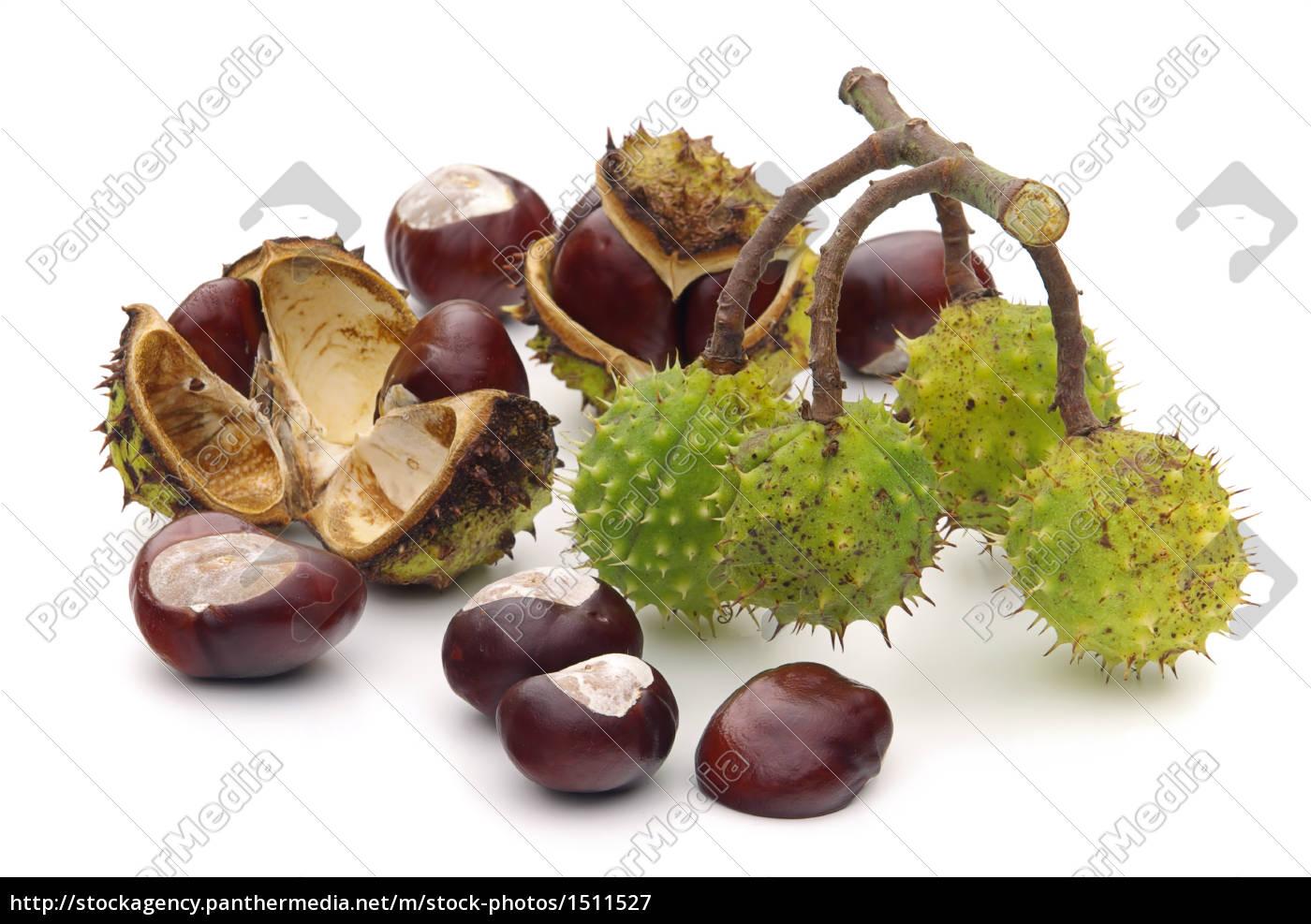 chestnut, -, conker, 11 - 1511527