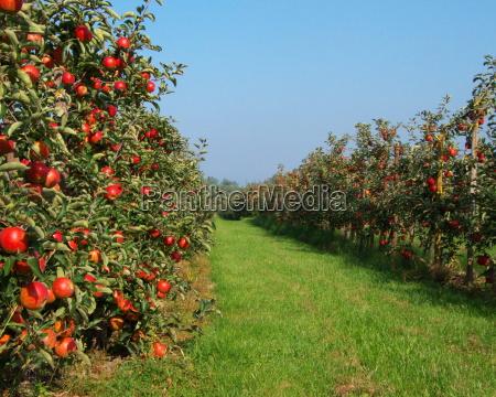 fruit growing area