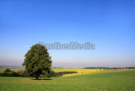 broad land