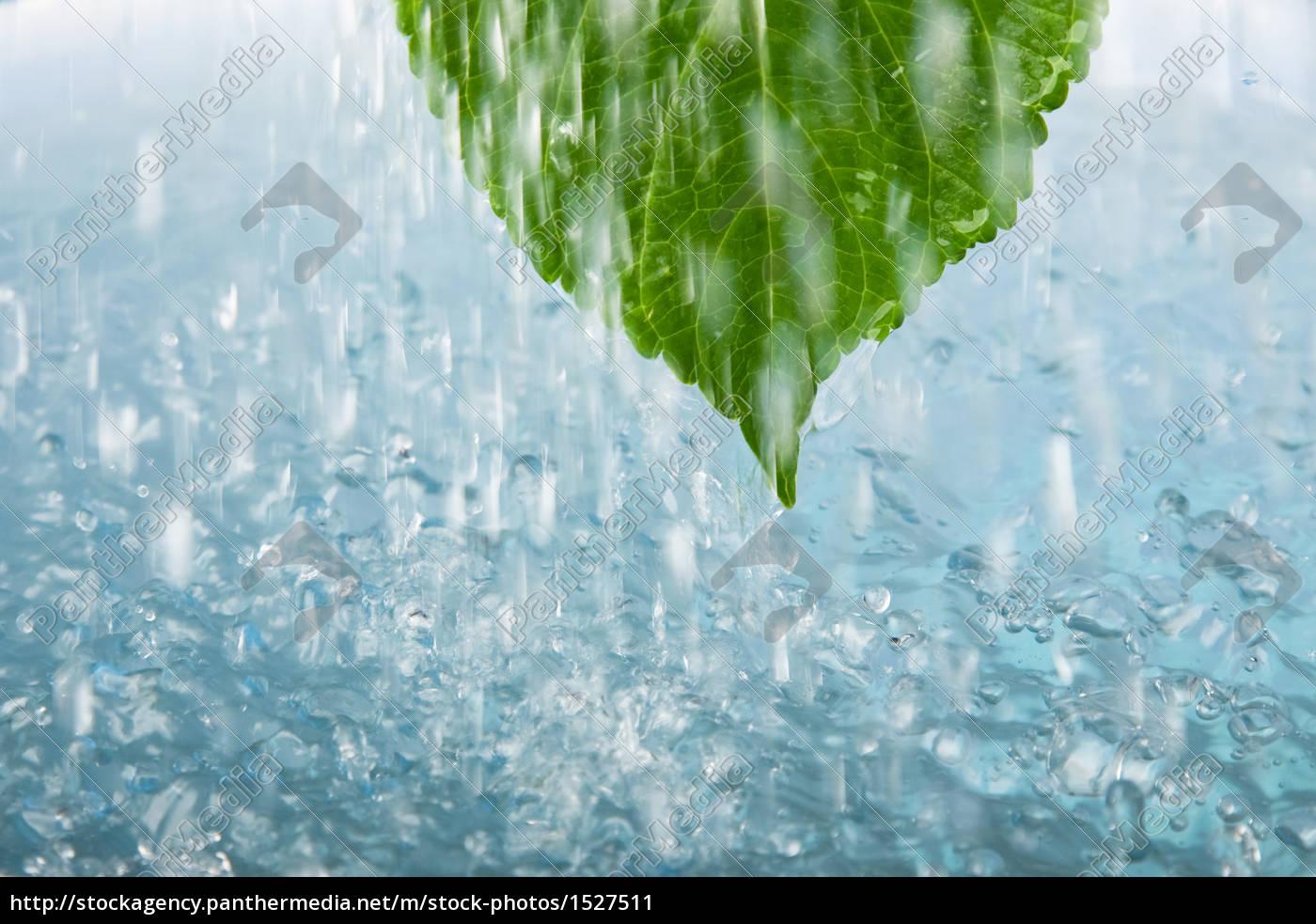 leaf, relaxation, wellness, shower, bathing resort, spa - 1527511