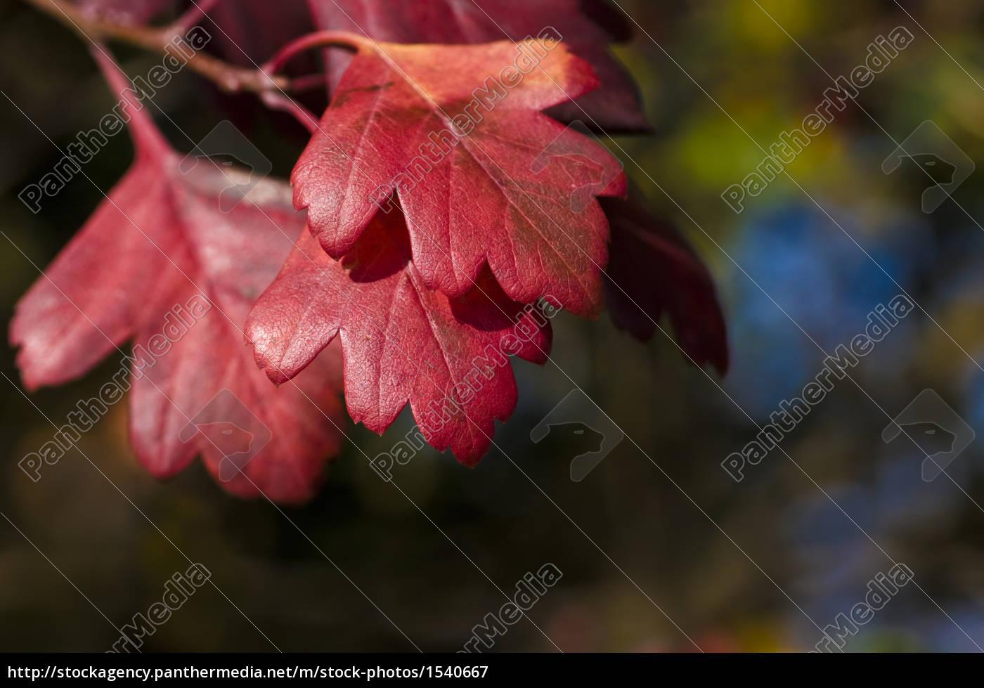 autumn, leaves - 1540667