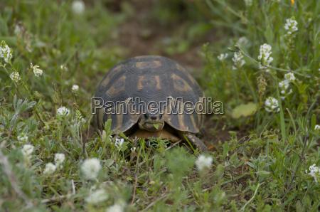 turtle in westcoastnp
