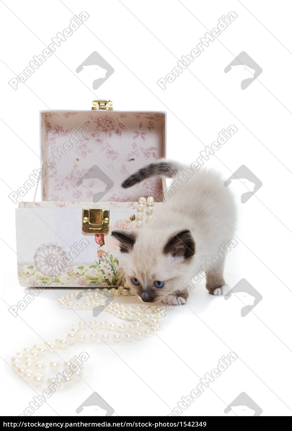kitten, with, jewelry - 1542349