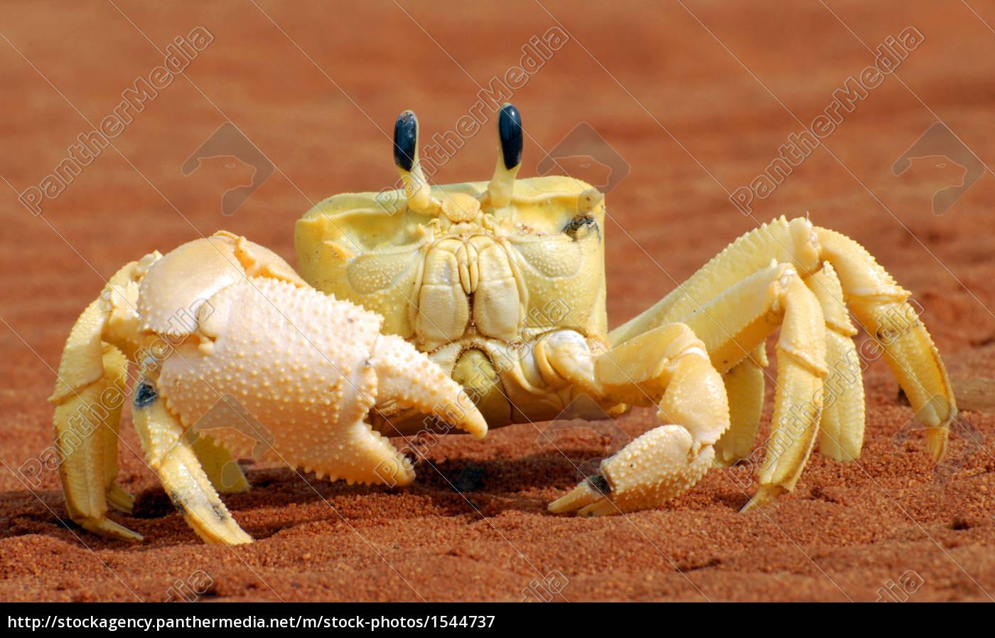 crab - 1544737