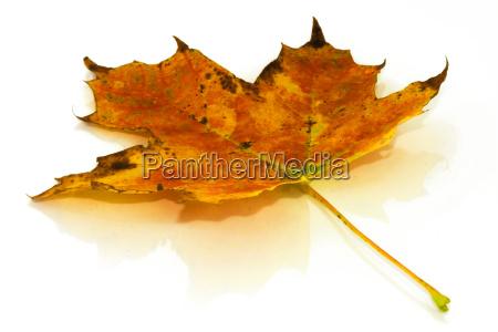 autumn, leaf - 1549713