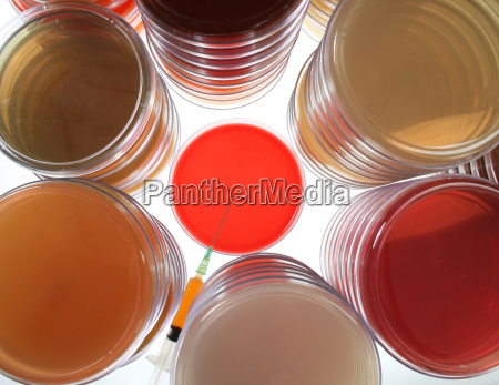 petri dishes for medical research