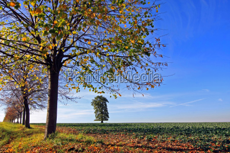 colour tree leaves coloured colourful gorgeous