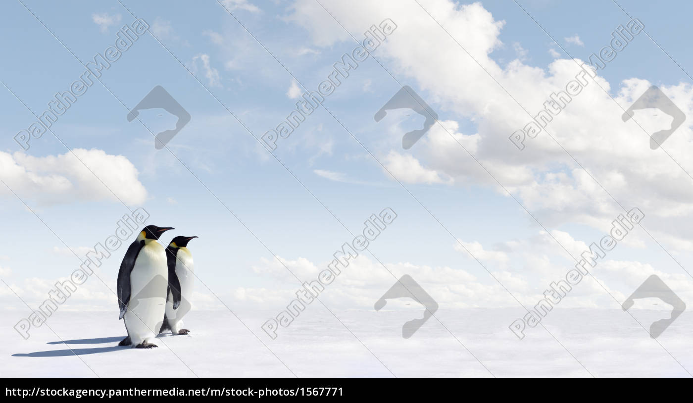 penguin, panorama - 1567771
