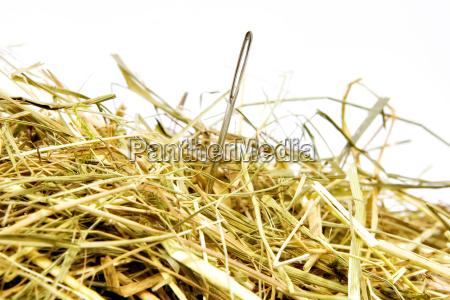 needle, in, a, haystack - 1582105