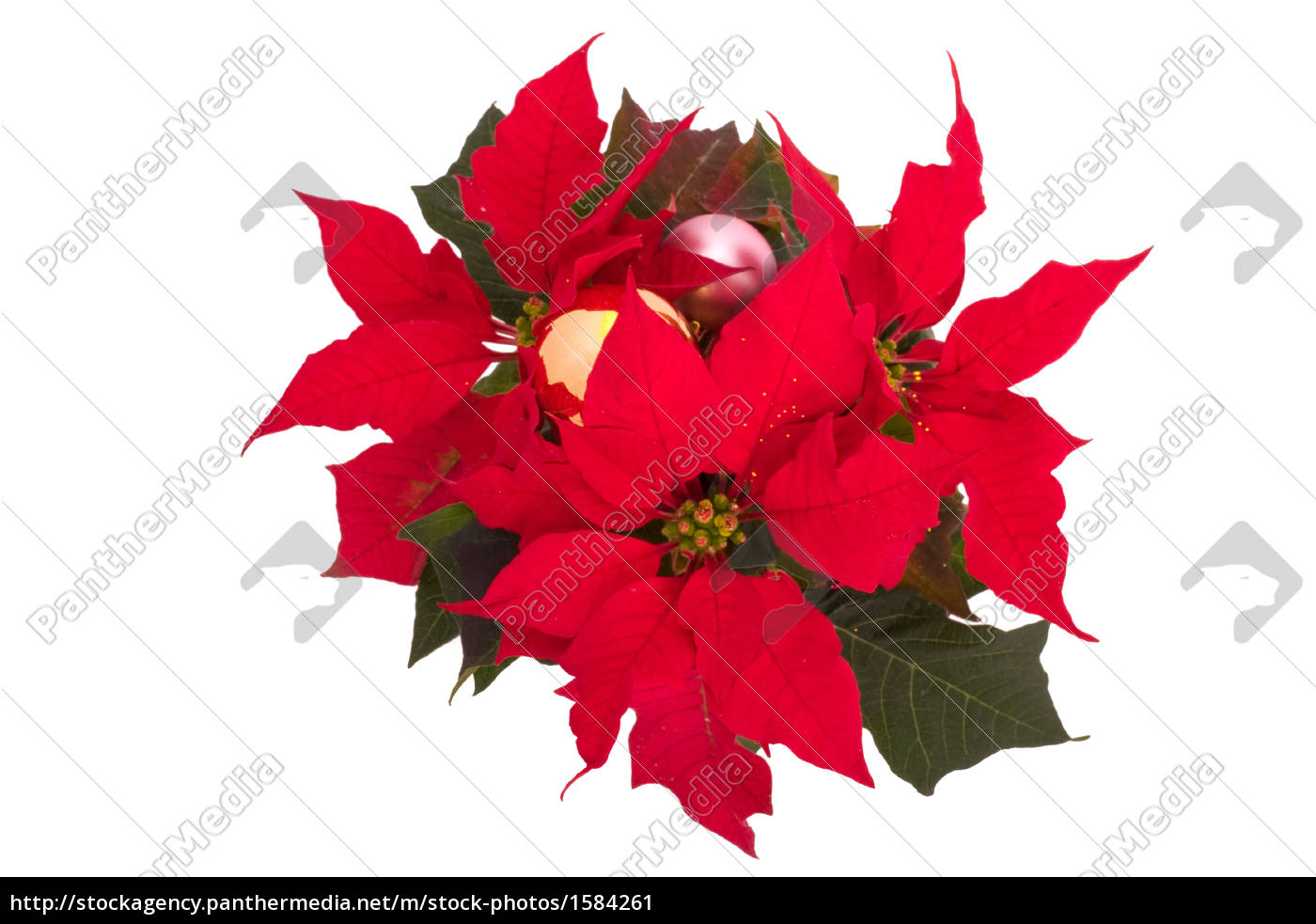 christmas, flower, with, balls - 1584261