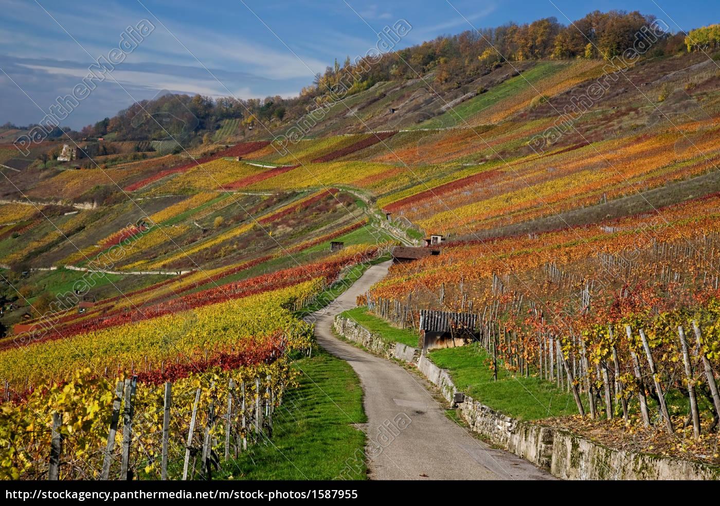 autumnal, vineyard - 1587955