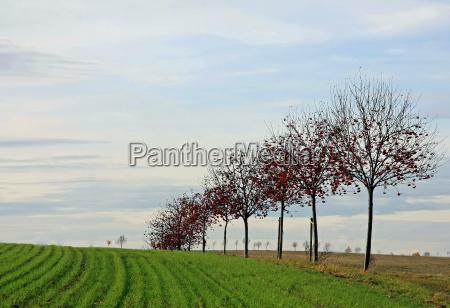 green fields red fruits