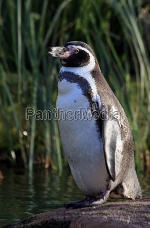 animal bird birds penguin beak put