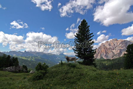 mountains dolomites alps south tyrol sight