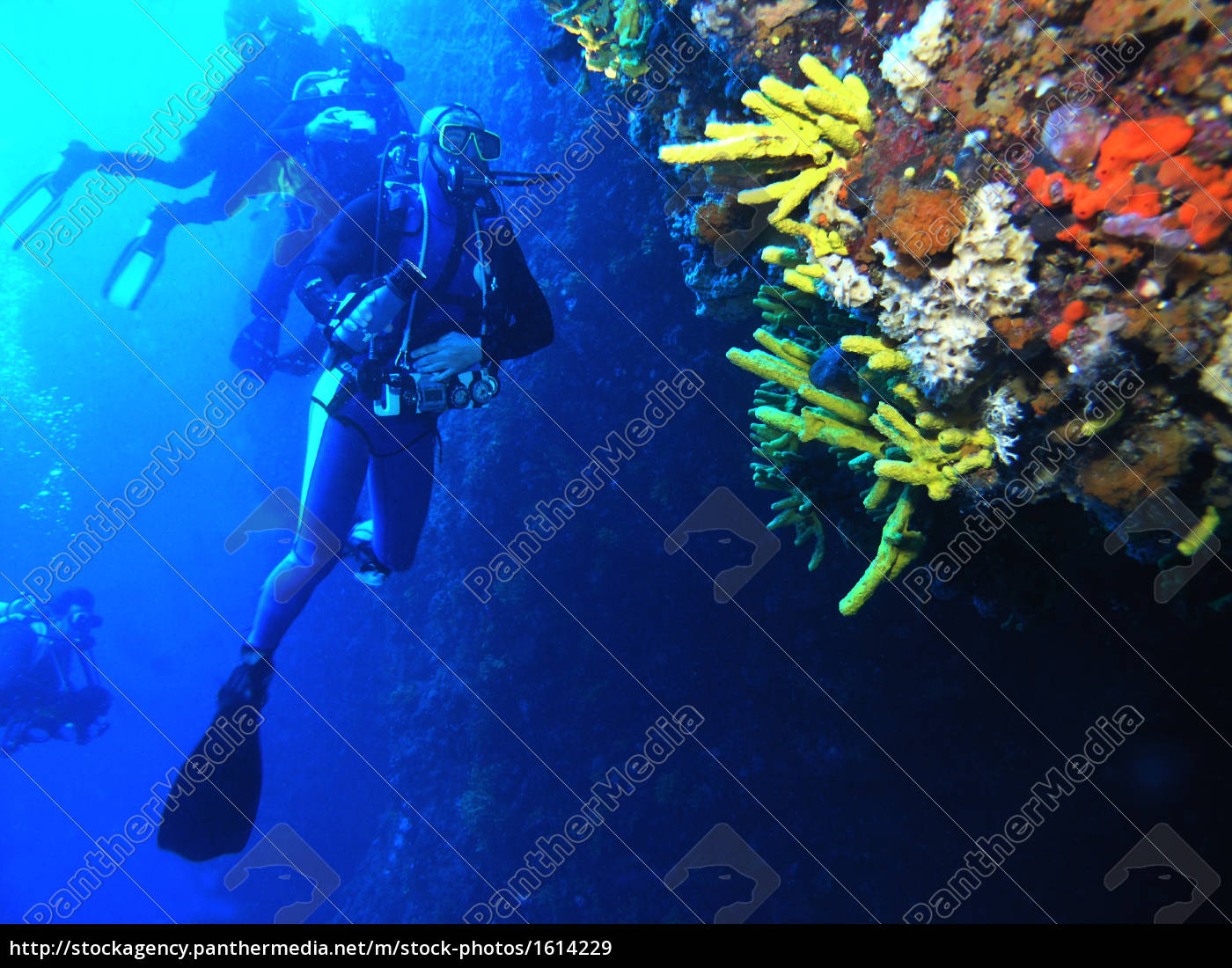 diver, cliff - 1614229
