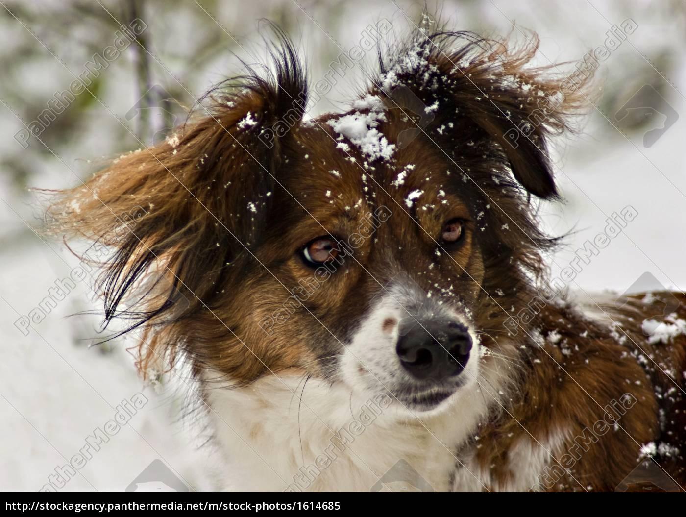 snowball, fight, ..., i'll, .. - 1614685