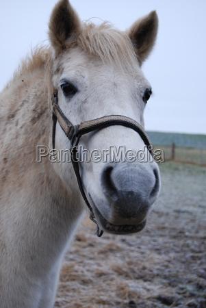 animal pet mammal horse pony mare