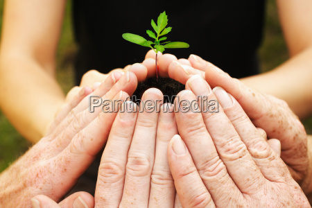 six hands protect a seedling