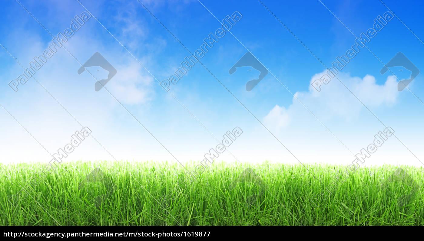 wet, grass - 1619877