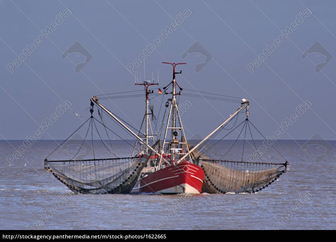 fish, cutter - 1622665