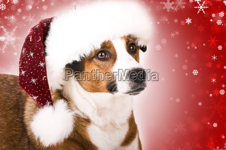 dog, with, snowflakes - 1624379