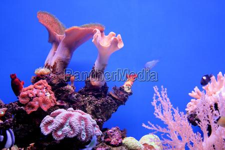 underwater, world - 1635453