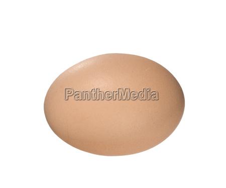 fresh, egg - 1637917